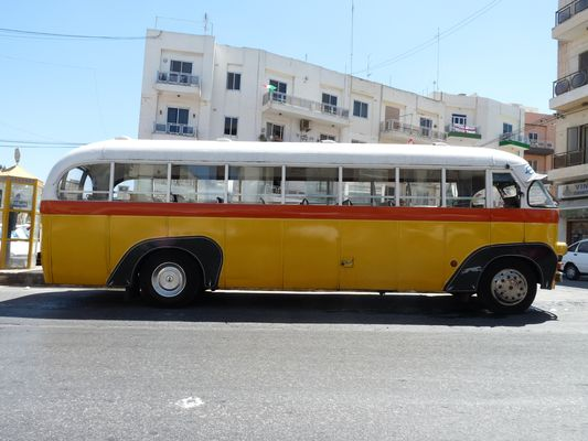 Maltese bus