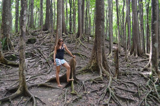 crazy sexy fun traveler in Mahogany man-made forest in Bohol