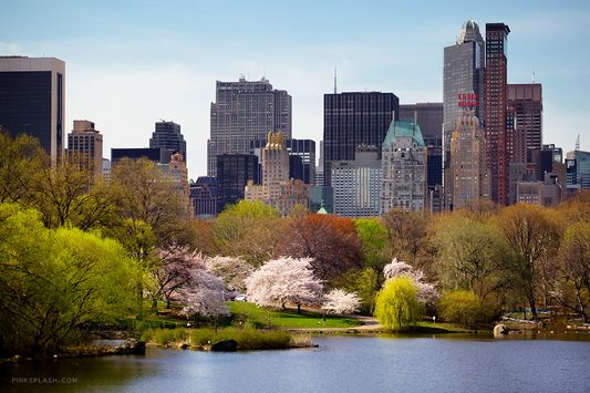 Top experiences to try in New York Central Park