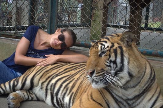 playing with tigers in Tiger Kingdom in Chiang Mai