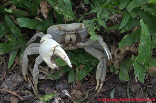 a crab in Four Seasons Nevis