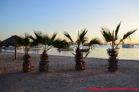 little palm trees on La Paz coast