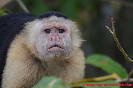 Monkey island tour Panama City – wild monkeys and Wounaan tribe