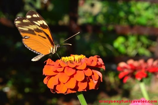 a butterfly in the Blue Osa garden