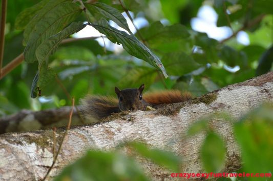 a squirrel wildlife Osa Peninsula