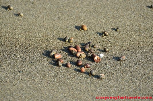 baby crabs on Tamales beach Osa Peninsula