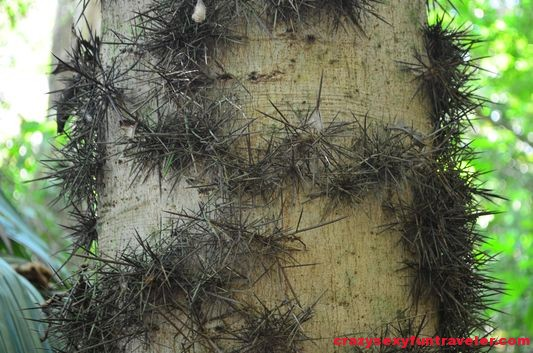 spiny palm wildlife Osa Peninsula