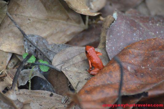 Samasati Nature Retreat Costa Rica (36)