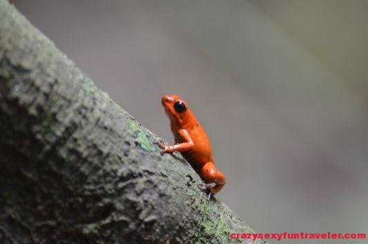 Samasati Nature Retreat Costa Rica (40)