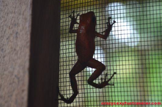 Samasati Nature Retreat Costa Rica (48)