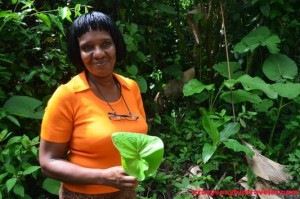 Caribbean medicine Hidden Garden workshops (6)