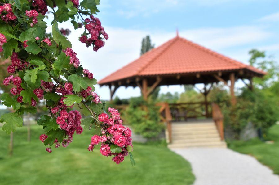 zakvitnuty strom v parku Malvazia hotel