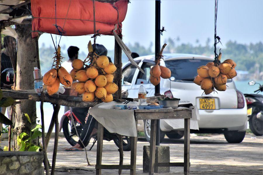 mlade kokosy king coconuts