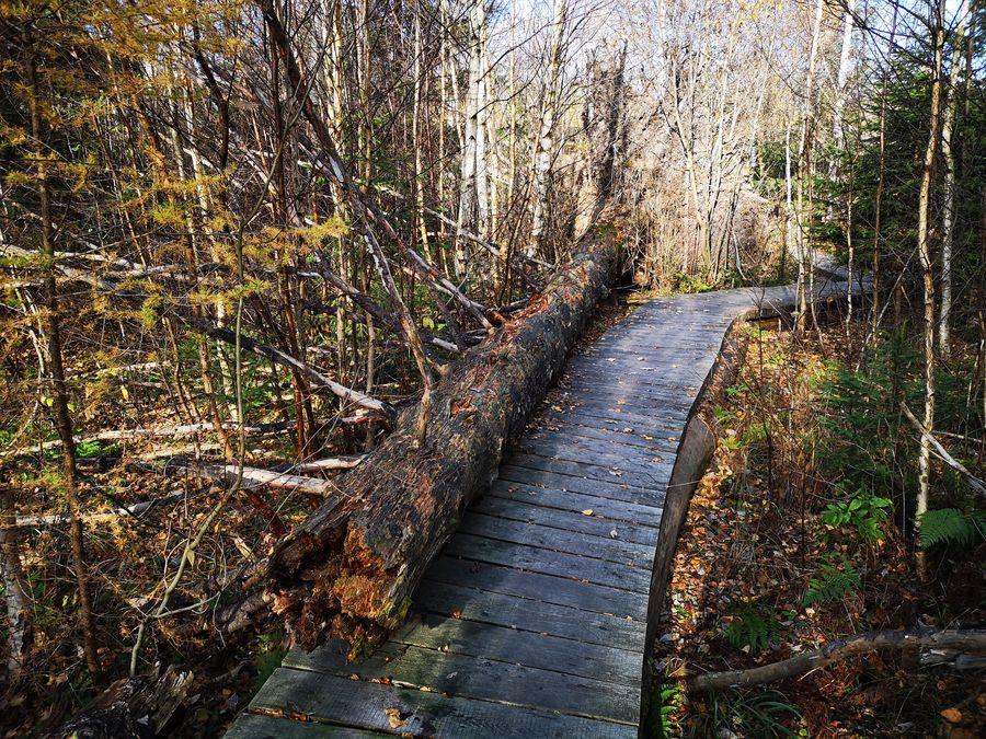 spadnuty strom naucny chodnik Pramenisko