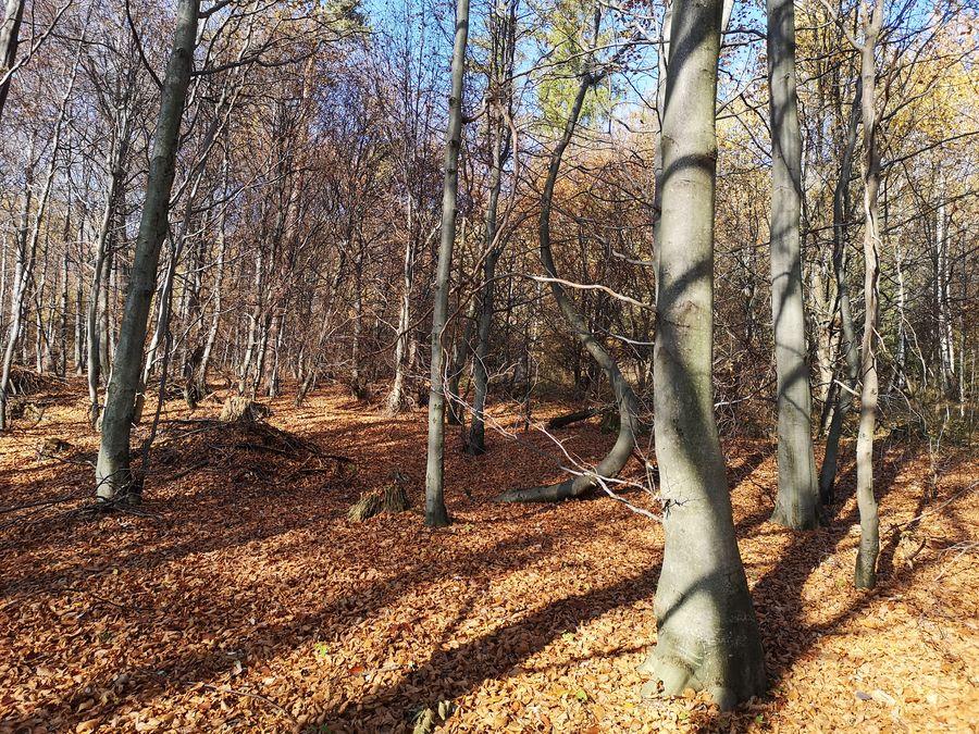 tatransky les