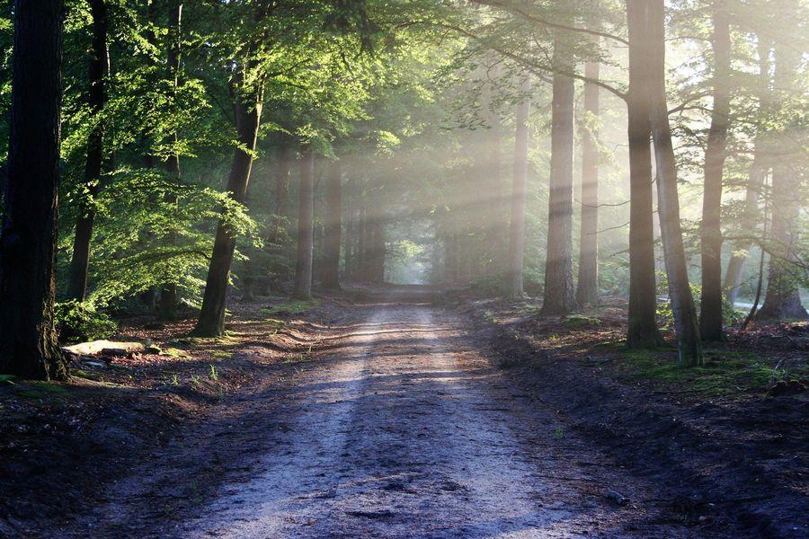 sam v lese