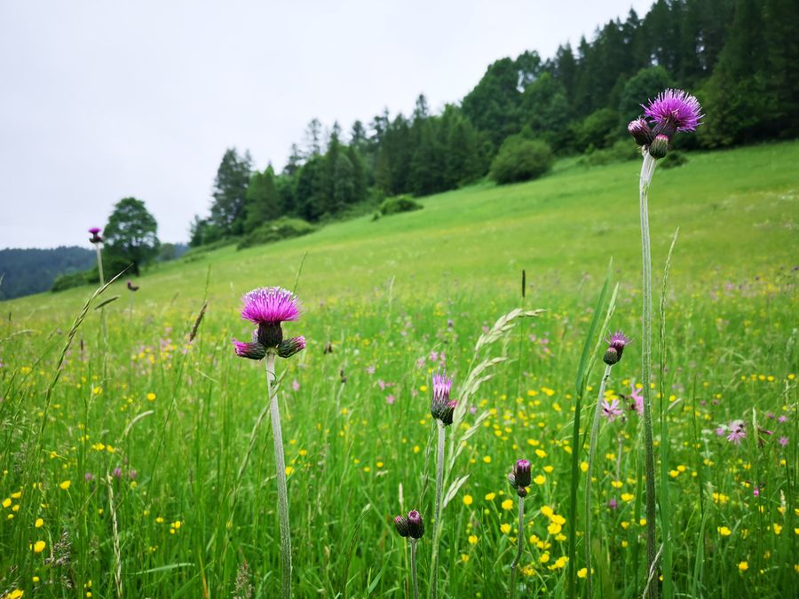 luky plne kvetov okolo Relova