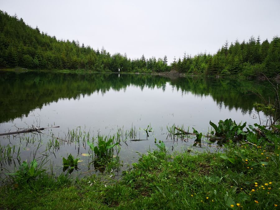 Jezerske jazero zblizka