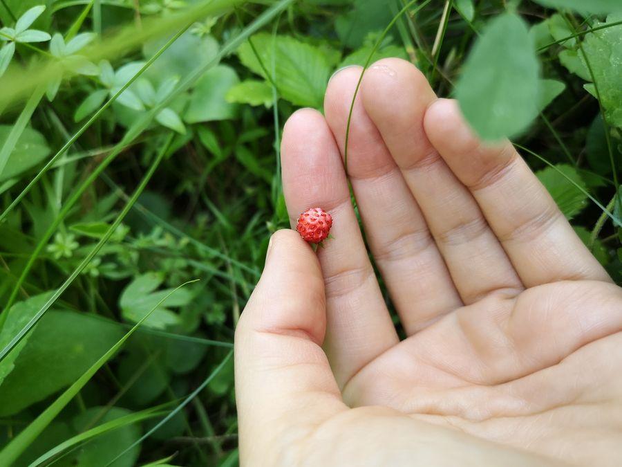 lesne jahody