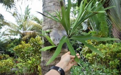 Botanical Garden Jardin Des 5 Sens Rodrigues Top Things To Do On Rodrigues Island Mauritius (30)