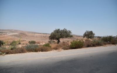 Jordan Valley Close To Jericho West Bank Palestine (18)