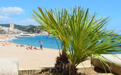 Lloret De Mar Beach (4)
