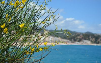 Lloret De Mar Coastal Walk To Fenals (9)
