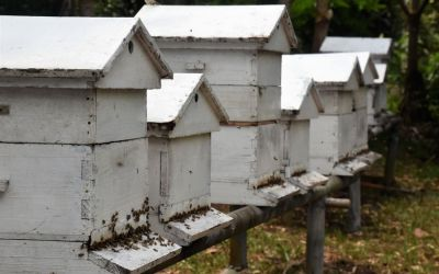 Miel Victoria Bee Farm Rodrigues Island Top Things To Do On Rodrigues Island Mauritius (10)