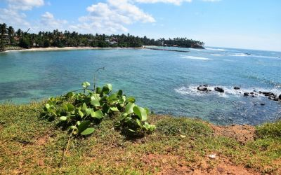 Mirissa Best Beaches In Southern Sri Lanka (7)