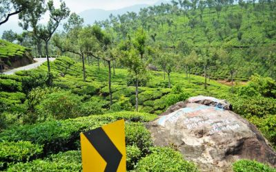 Munnar Tea Plantations And Other Landmarks (10)