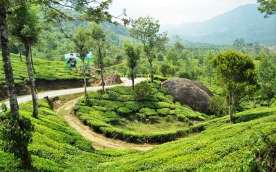 Munnar Tea Plantations And Other Landmarks (11)