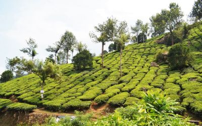 Munnar Tea Plantations And Other Landmarks (14)
