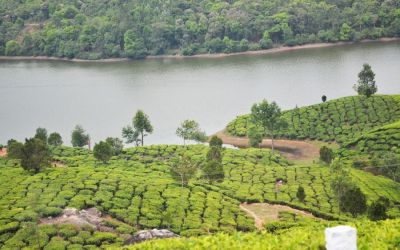Munnar Tea Plantations And Other Landmarks (16)