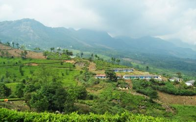 Munnar Tea Plantations And Other Landmarks (17)