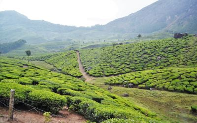 Munnar Tea Plantations And Other Landmarks (18)