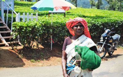 Munnar Tea Plantations And Other Landmarks (4)