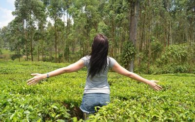 Munnar Tea Plantations And Other Landmarks (5)