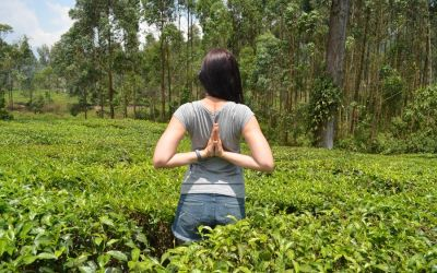 Munnar Tea Plantations And Other Landmarks (6)