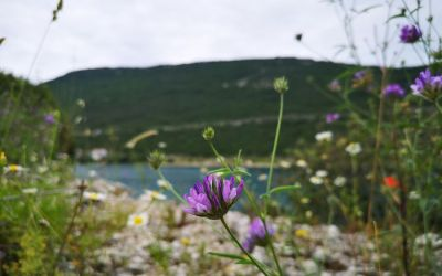 flowers in Neum Bosnia and Herzegovina