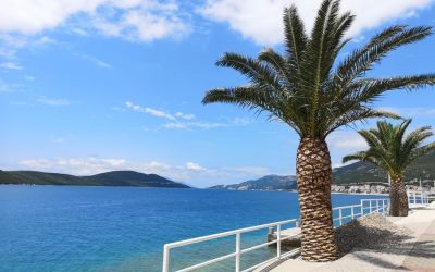 palm trees in Neum Bosnia and Herzegovina