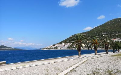 beach palm trees in Neum Bosnia and Herzegovina