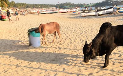 Top Things To Do In Palolem Goa India (2)