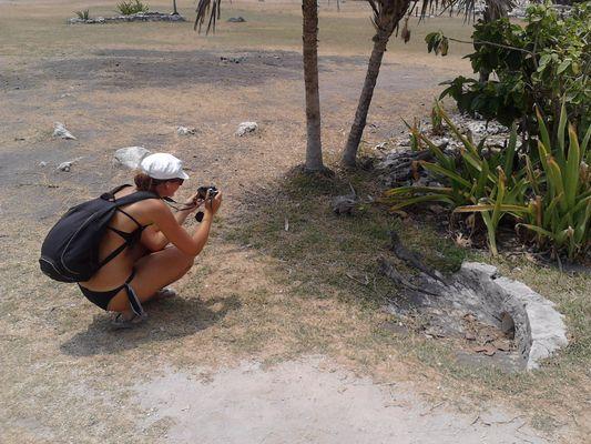 many iguanas in Tulum ruins