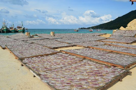 Chaloklum drying of fish on Koh Phangan