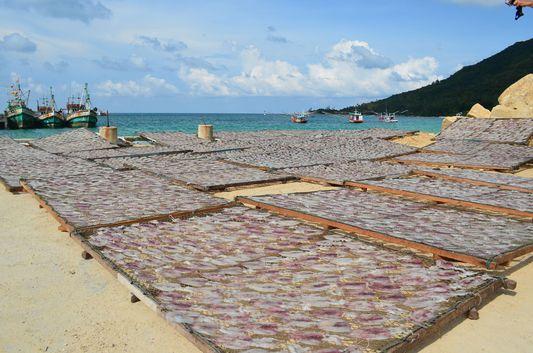 Chaloklum drying of fish on Koh Phangan