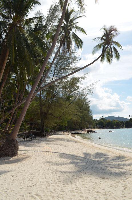 Coconut beach on Ko Phangan