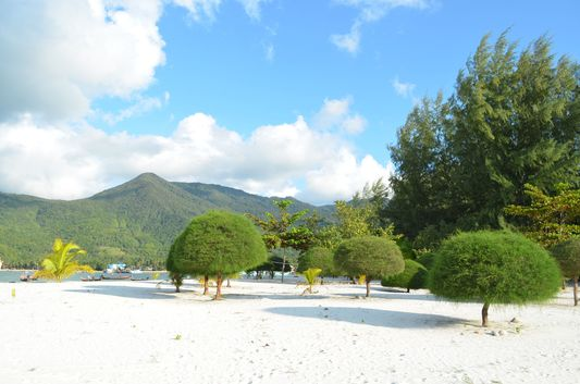 Malibu beach mushroom trees on Ko Phangan