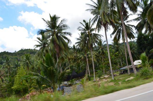 jungle rainforest on Koh Phangan