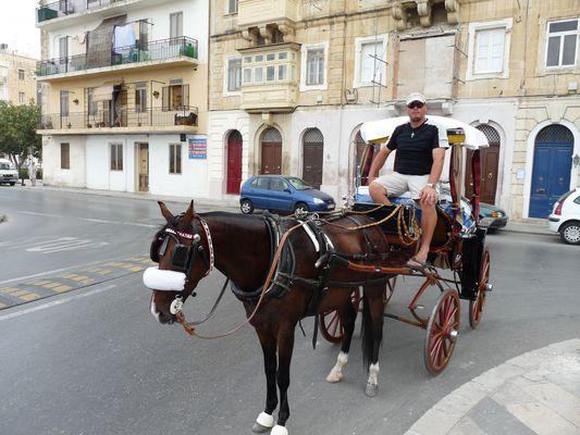 horses in Valletta in Malta