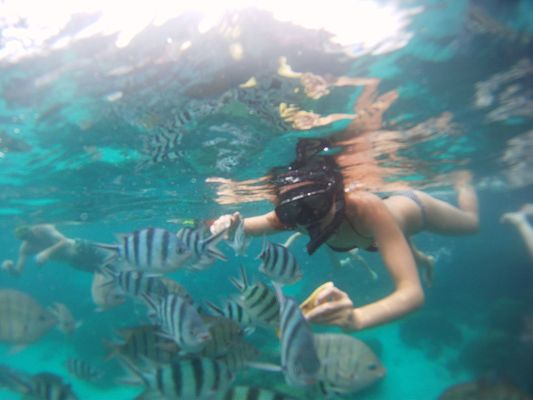 snorkel and feeding fish with a banana in Angthong Marine National Park